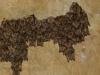 Jarné zhromažďovanie netopierov
