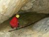 Veľká mločia jaskyňa